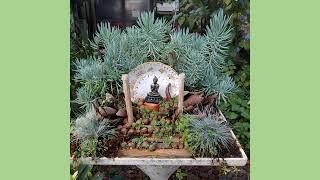 Fotos - Belas Paisagens1 - Jardim Mandala 2X
