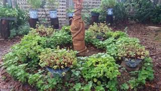 Fotos - Belas Paisagens1 - Jardim Mandala 1S