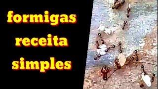 Como afastar formigas da sua horta sem usar veneno