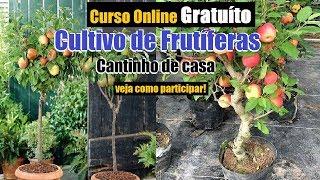 Curso online AO VIVO 100% Gratuito de Cultivo de Frutíferas(Tudo que vc precisa saber)